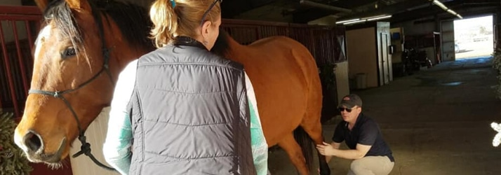 Chiropractic Care for Horses in Niwot CO