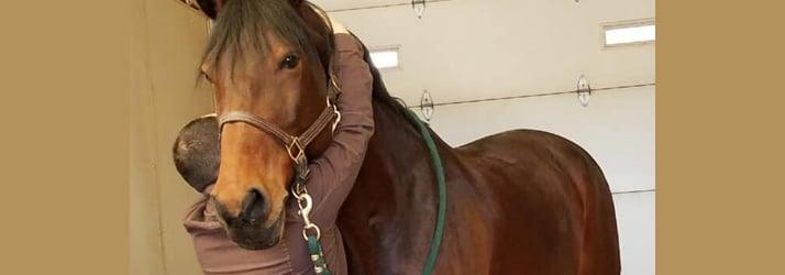 Horse Chiropractic Adjustment in Niwot CO